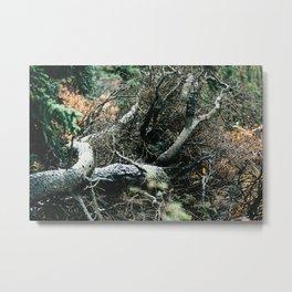 Downed Trees in Fall Season at Denali National Park, Alaska Metal Print