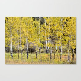 Young Elk Traumatized Aspen Grove Canvas Print