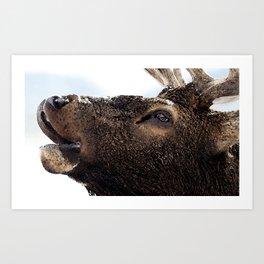 Watercolor Bull Elk Greeting Art Print