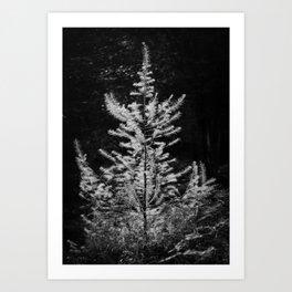 Contre-jour - 01 Art Print