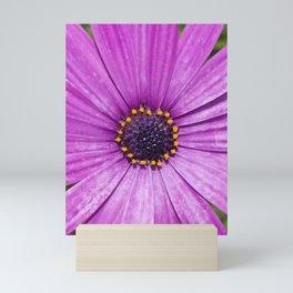 Purple Daisy Flower Mini Art Print