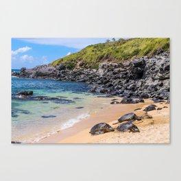 Maui Sea Turtles Canvas Print