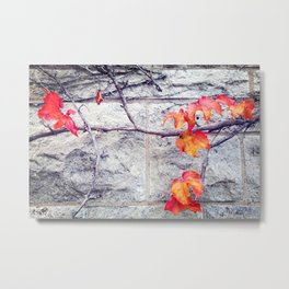 Red Leaves Growing by the Wall. Autumn Metal Print