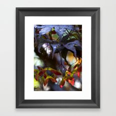 Japanese Maple Seeds III Framed Art Print