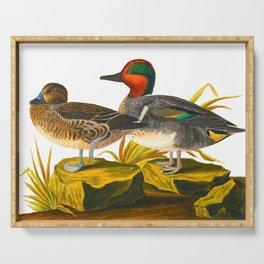 Green winged Teal James Audubon Vintage Scientific Illustration American Birds Serving Tray