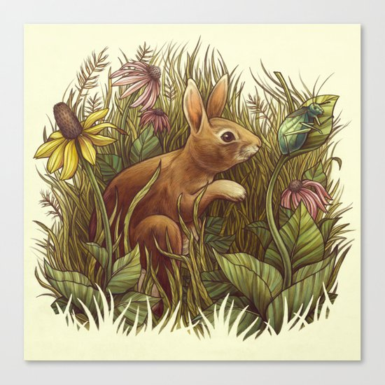 The Cottontail and the Katydid Canvas Print