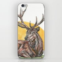 stag iPhone & iPod Skins featuring Stag by Meredith Mackworth-Praed