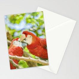Ecuadorian Parrots Kissing at Zoo, Guayaquil, Ecuador Stationery Cards