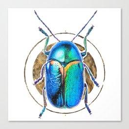 Scarab Beetle Canvas Print
