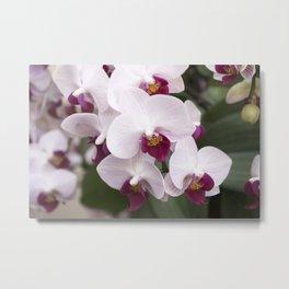 Longwood Gardens Orchid Extravaganza 4 Metal Print