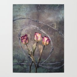 Trapped Roses Poster