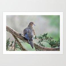 Gentle Dove Art Print