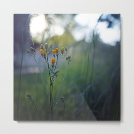 Midsummer Dream. Metal Print