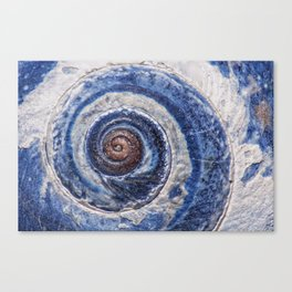 Blue spiral sea snail Canvas Print