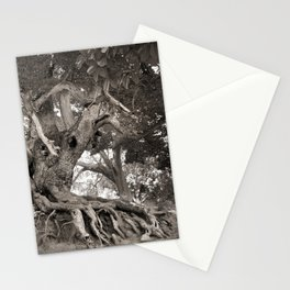 1000 years old chestnut tree Stationery Cards