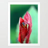 ladybug Art Prints featuring Ladybug by LoRo  Art & Pictures