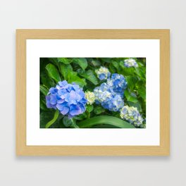 Blue and Yellow Hortensia Flowers Framed Art Print