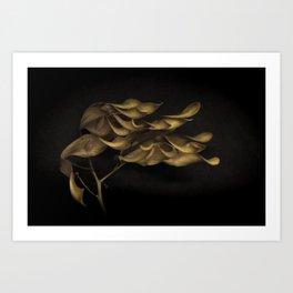 SEEDS 02 Art Print