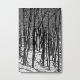Through the Snowy Beech Wood Metal Print