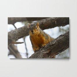 Animal Photography-Squirrel Metal Print