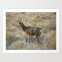 Buck in Colorado Art Print