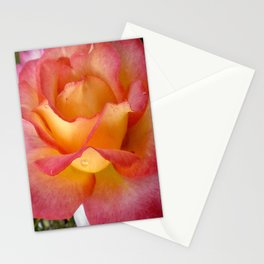 Dew Drop Fire Rose, 2012 Stationery Cards