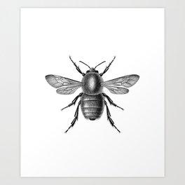 Bugg Art Print