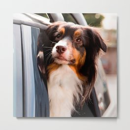 A Dog With Her Head Out of a Car Window Metal Print