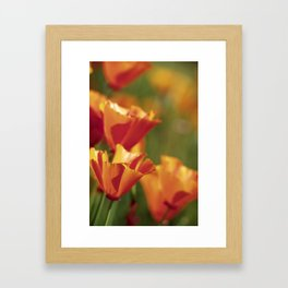 Springtime Poppies Framed Art Print