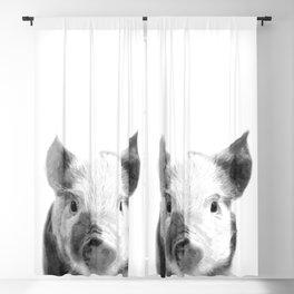 Black and white pig portrait Blackout Curtain