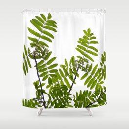 Green Rowan Leaves White Background #decor #society6 #buyart Shower Curtain