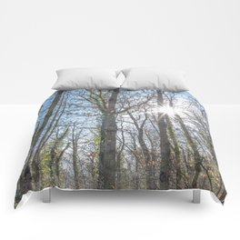 Sunrays on the forest Comforters