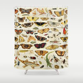 "Jan van Kessel the Elder ""An Extensive Study of Butterflies, Insects and Seashells"" Shower Curtain"