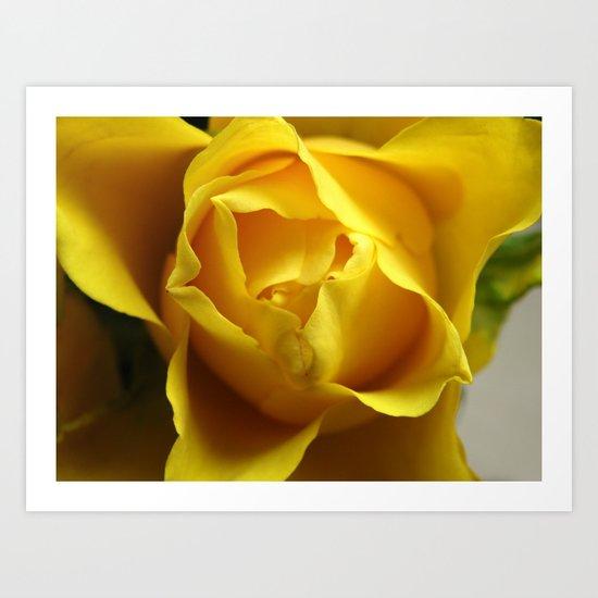 Yellow Roses #3 Art Print