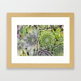 Bountiful Succulents Framed Art Print