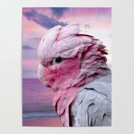 Galah Cockatoo Poster