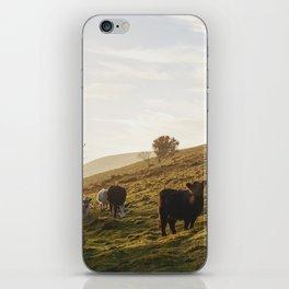 Cattle grazing on mountainside. Derbyshire, UK. iPhone Skin