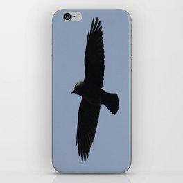 Jackdaw In Flight iPhone Skin