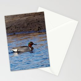 Green-winged Teal Drake Stationery Cards