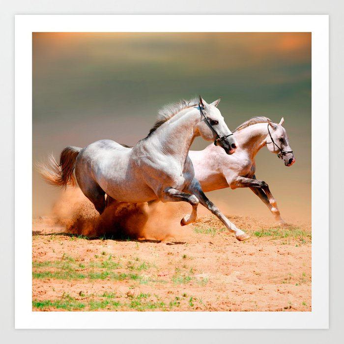 Two White Horses Running Art Print By Marios Society6
