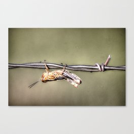 Hang on Baby Friday's Coming Canvas Print