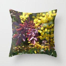 Acacia tree in spring Throw Pillow