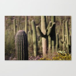 Cactus in Saguaro National Park Canvas Print