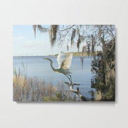 Great Egret at Lake Tarpon Metal Print