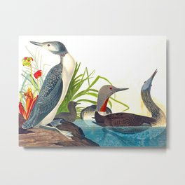 Red-Throated Diver Duck Metal Print