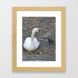 Swan and Jackdaw Framed Art Print
