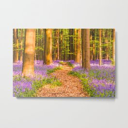 Bluebell Carpet at Hallerbos (Belgium) Metal Print