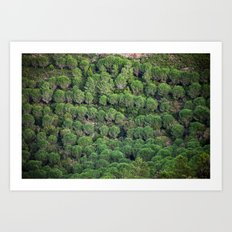 Young pine forest 6809 Art Print