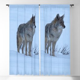 Watercolor Coyote 02, Perusing the Snowy Hills Blackout Curtain