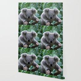 Koala and Eucalyptus Wallpaper